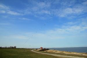 Schönes Wetter in Hooksiel.Der Sandstrand von Hooksiel mit Drachen. Blick vom Aussenhafen.