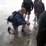 Wattwanderung zur Vogelschutzinsel Minsener Oog